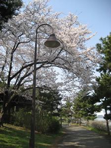 odaiba-20070401-2.jpg